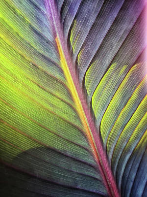 Photograph - Canna 9 by Jill Love