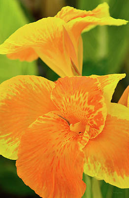 Canna Photograph - Canna by Kathy Yates