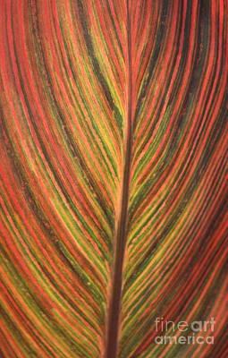 Canna Photograph - Canna Leaf by Patrick  Short