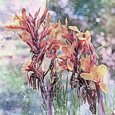 Digital Art - Canna Lilies by Barbara Berney
