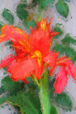 Canna Lily 3 Original by John Freidenberg