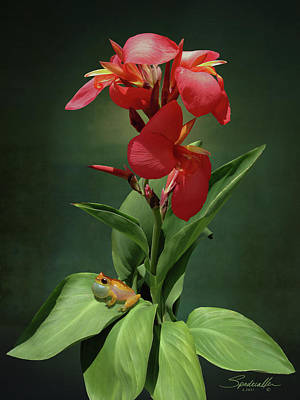 Canna Lily And Hourglass Tree Frog Art Print by IM Spadecaller