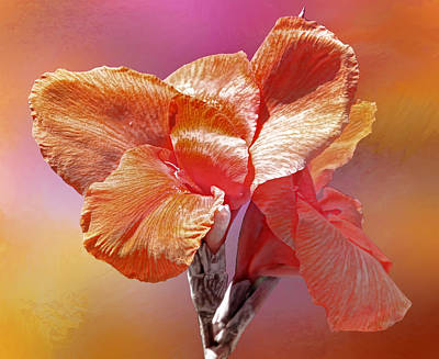 Canna Photograph - Canna Lily by HH Photography of Florida