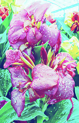 Photograph - Canna Lily With Water Drops by Dorothy Berry-Lound