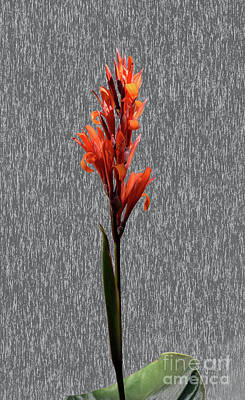 Photograph - Canna On Granite by Tom Wurl