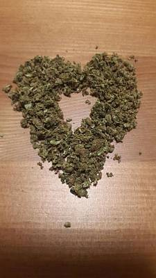 Photograph - Cannabis Love  by Moshe Harboun