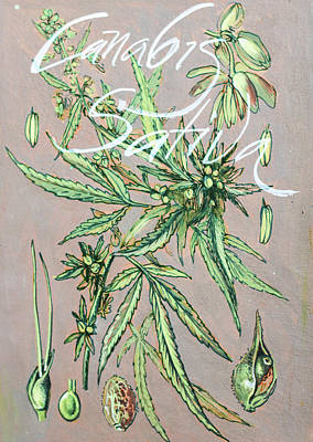 Mixed Media - Cannabis Sativa.marijuana Botanical by Vali Irina Ciobanu