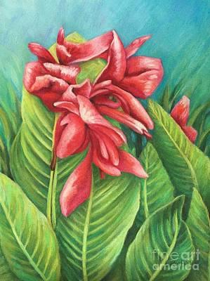 Cannas Bloom Original
