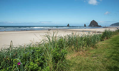 Photograph - Cannon Beach And Purple Bloom by Tom Cochran
