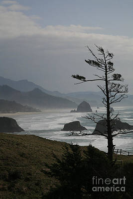 Photograph - Cannon Beach by Timothy Johnson