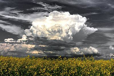 Photograph - Canola Clouds by David Matthews