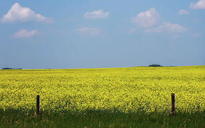 Photograph - Canola Field Alberta Canada by Terry DeLuco