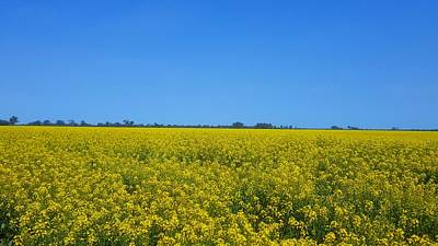 Water Droplets Sharon Johnstone - Canola Field by Andrew Hunt