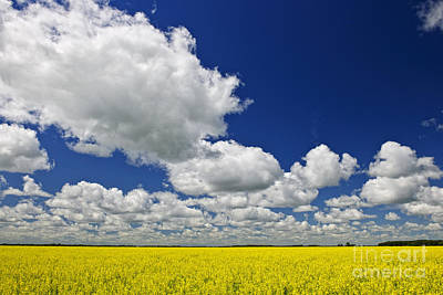 Harvest Photograph - Canola Field by Elena Elisseeva