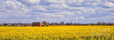 Canola Field Art Print by John Edwards