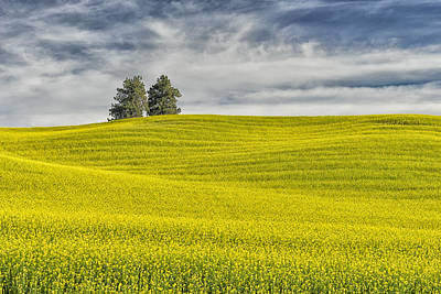 Photograph - Canola Field Palouse Wa Dsc04496 by Greg Kluempers