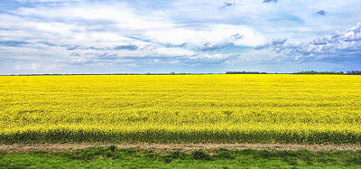 Photograph - Canola Field - Photography by Ann Powell