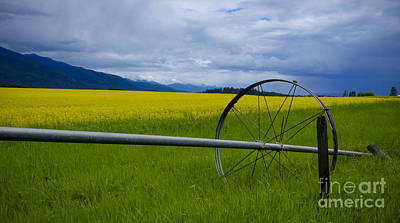 Photograph - Canola by Idaho Scenic Images Linda Lantzy