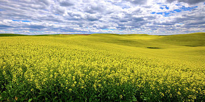 Photograph - Canola On The Palouse by David Patterson