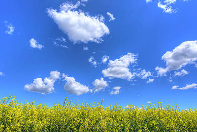 Photograph - Canola Skies by Spencer McDonald