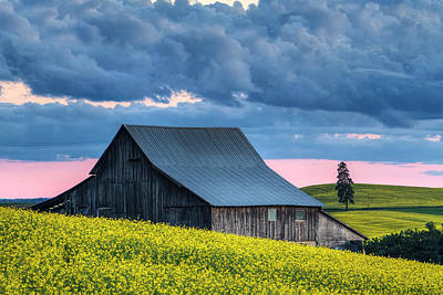 Photograph - Canola Sunset by Mark Kiver