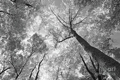 Photograph - Canopy by Charles Owens