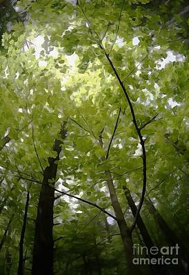 Photograph - Canopy by Cj Mainor