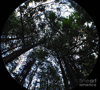 Photograph - Canopy by Clayton Bruster
