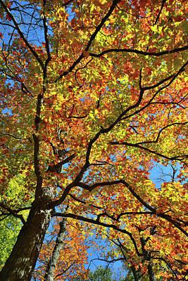 Photograph - Canopy Color Splash Along Des Plaines River by Ray Mathis