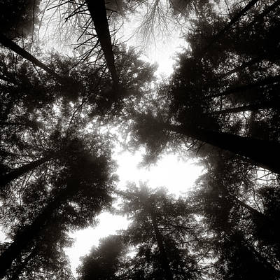 Canopy Art Print by Dave Bowman