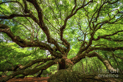 Surrealism Royalty-Free and Rights-Managed Images - Canopy Of Color at Angel Oak Tree  by Michael Ver Sprill