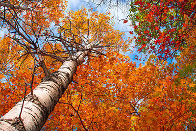 Photograph - Canopy Of Color by Bill Pevlor