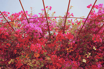 Garden Mixed Media - Canopy Of Color- Photography By Linda Woods by Linda Woods