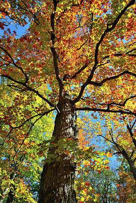 Photograph - Canopy Of Fall Color Along Des Plaines River by Ray Mathis