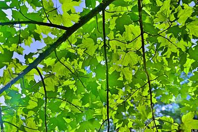 Photograph - Canopy Of Leaves by Lisa Wooten