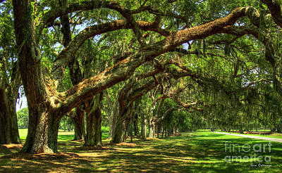 Photograph - Canopy Of Shade Ave Of Oaks Sea Island Georgia Art by Reid Callaway