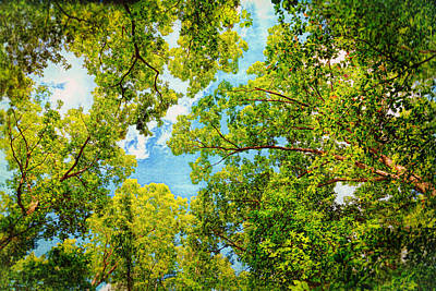 Photograph - Canopy Of Trees by John M Bailey