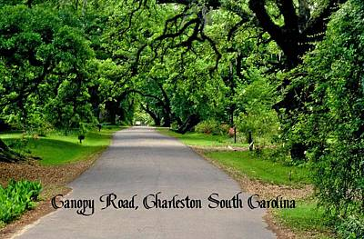 Photograph - Canopy Road by Gary Wonning