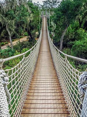 Photograph - Canopy Trail At Santa Ana Wildlife Refuge by Debra Martz