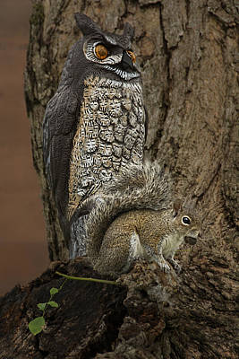 Can't Scare Me - Owl Decoy And Brave Squirrel Art Print by Mitch Spence