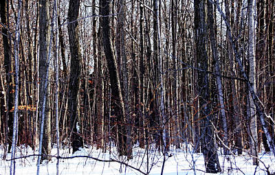 Photograph - Can't See The Forest For The Trees by Debbie Oppermann