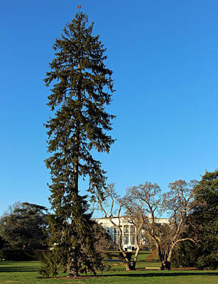 Photograph - Can't See The White House For The Trees by Cora Wandel