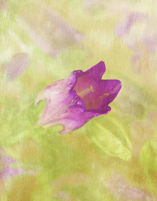 Photograph - Canterbury Bell Flower Painted 2 by Sandi OReilly