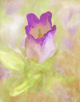 Photograph - Canterbury Bell Flower Painted by Sandi OReilly