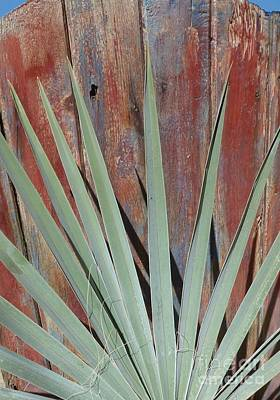 Painted Palm Frond Photograph - Cantina Gate With Palm Frond by Barbie Corbett-Newmin
