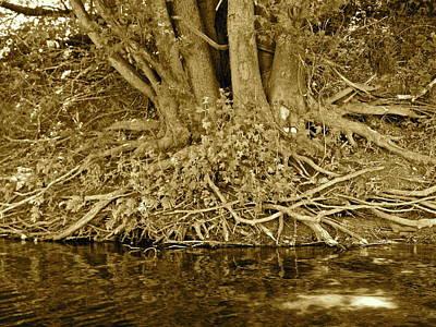 Photograph - Canton Canoe Trip 2016 16 by George Ramos
