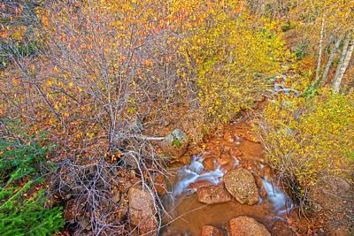 Chokecherry Photograph - Canvas In The Canyon by Bijan Pirnia