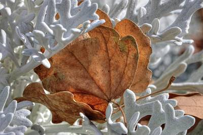 Photograph - Canvas Leaves by David Andersen