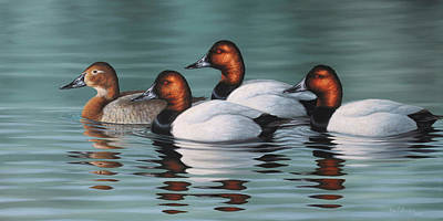 Wall Art - Painting - Canvasback Courtship by Guy Crittenden