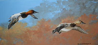 Canvasbacks Art Print